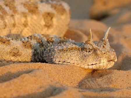 Perierga.gr - Τα πιο περίεργα φίδια