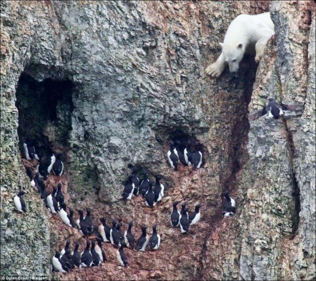 Perierga.gr - Η τολμηρή αρκούδα!