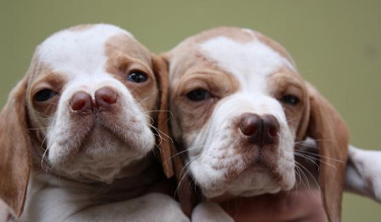 Perierga.gr - Περίεργες ράτσες σκύλων