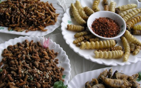 Perierga.gr - Μέχρι το 2020, στην Ευρώπη θα τρώμε έντομα