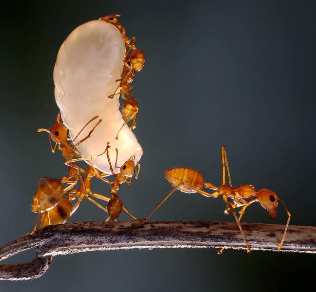 Perierga.gr - Χορευτικές φιγούρες…  από μυρμήγκια!