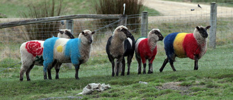 Perierga.gr - Πρόβατα σημαίες...