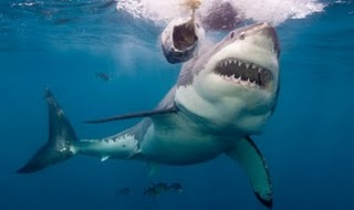 Perierga.gr - Τα πιο επικίνδυνα πλάσματα της θάλασσας