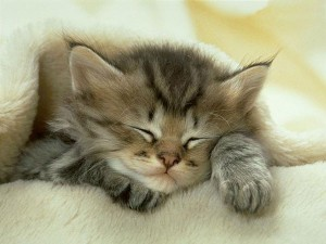 cat 300x225 Μια αδέσποτη γάτα δίνει μαθήματα… ανθρωπιάς! (βίντεο)