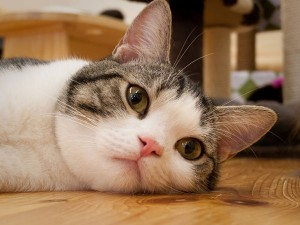 perierga.gr - Το σπουργίτι νομίζει ότι η γάτα είναι η... μαμά του!