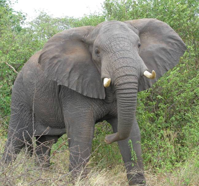 Perierga.gr - Τα πιο θανατηφόρα ζώα στον πλανήτη!