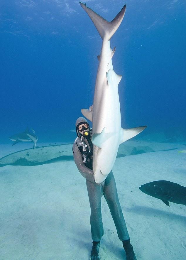 Perierga.gr -  Κάνει ό,τι θέλει τους καρχαρίες!