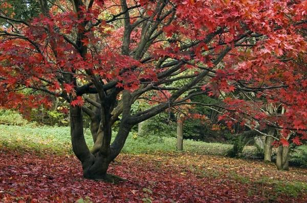 Perierga.gr - Γιατί κοκκινίζουν τα φύλλα το φθινόπωρο;