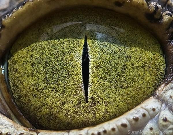 Perierga.gr - Τα μάτια των ζώων!