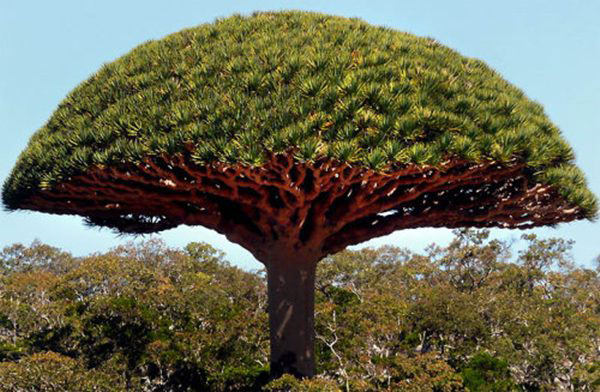 """perierga.gr - Ένα """"μανιταρόδεντρο"""" στο δάσος!"""