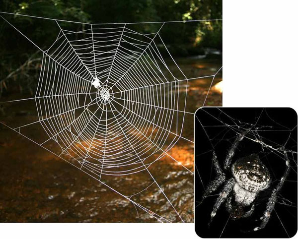 Perierga.gr - ο μεγαλύτερος ιστός αράχνης