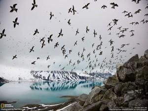 "perierga.gr - Ο ""μαγικός"" χορός των πουλιών στον αέρα"