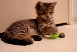 perierga.gr - Το τυφλό γατάκι που κατέπληξε τον κόσμο!