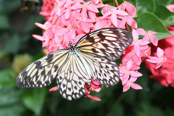perierga.gr - Ένας ζωολογικός κήπος για... πεταλούδες!