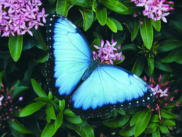 Ένας ζωολογικός κήπος για... πεταλούδες!