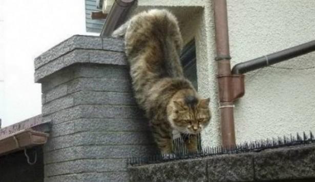 """perierga.gr - Το """"μαρτύριο"""" ενός... ερωτευμένου γάτου!"""