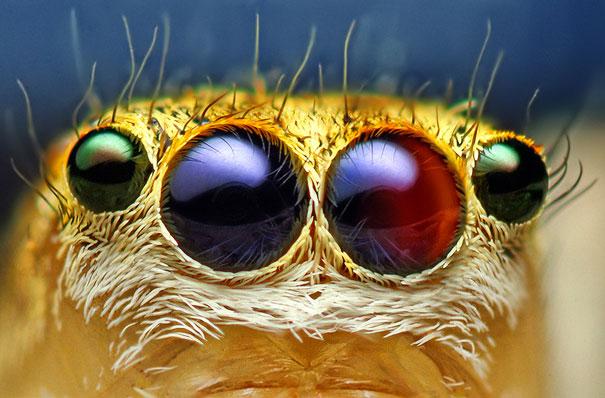 perierga.gr - Τα όμορφα και παράξενα μάτια των εντόμων!