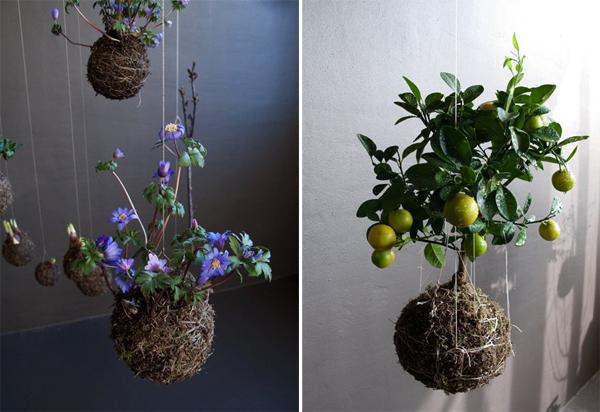 "perierga.gr - Ανθισμένοι ""κρεμαστοί κήποι"" στο σαλόνι σας!"