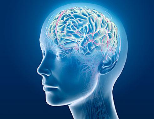 Perierga.gr - Οι πολλοί φίλοι…μεγαλώνουν τον εγκέφαλο!