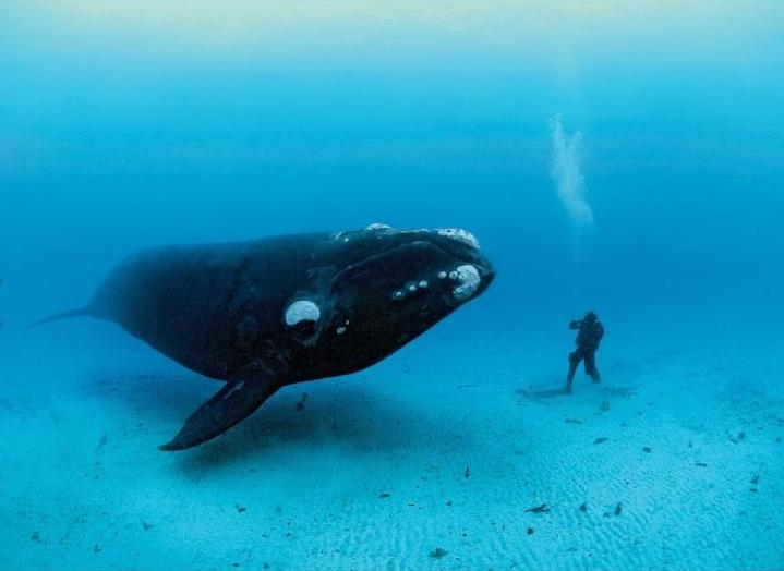 Perierga.gr - Η ψυχή των ωκεανών!