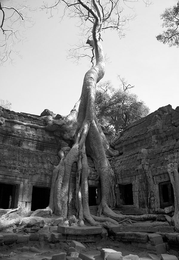 perierga.gr - Το πιο παράξενο δέντρο του κόσμου!