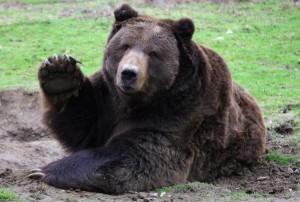Ευγενική αρκούδα ανταποδίδει χαιρετισμό