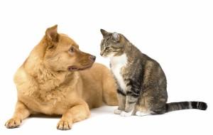 perierga.gr - Διαγωνισμός με τρικ: Γάτα vs Σκύλου!