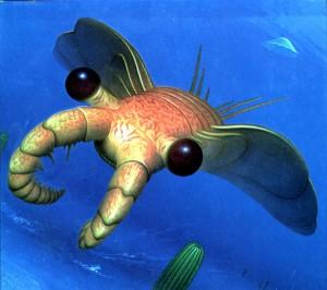 perierga.gr - Αυτή η γαρίδα βλέπει με 16.000 μάτια!