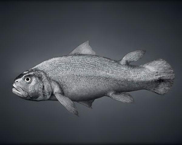 Αν ο άνθρωπος είχε δημιουργηθεί από ένα ψάρι…