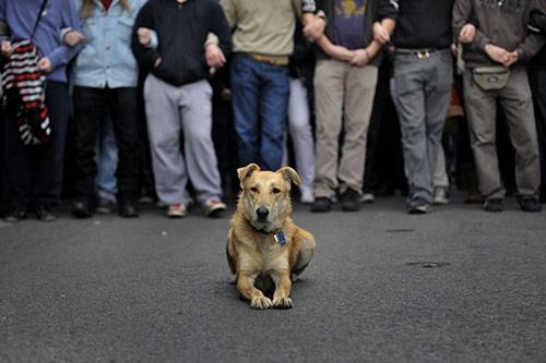 Λουκάνικος: Σκύλος της χρονιάς για το Time