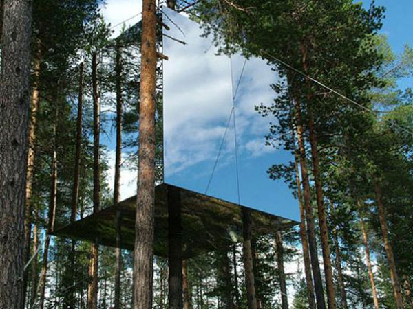 perierga.gr - Ένα ξενοδοχείο... σκαρφαλώνει στον κορμό ενός δέντρου!