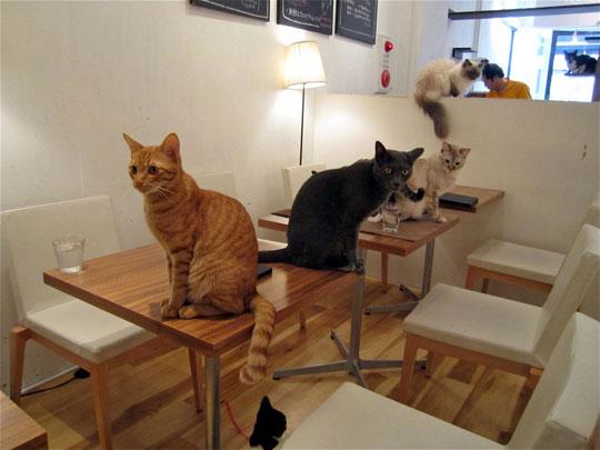 perierga.gr - Θέλετε συντροφιά για καφέ; Μια γάτα θα σας κάνει παρέα!