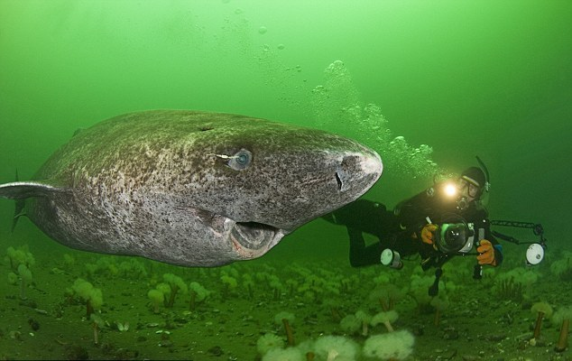 Perierga.gr - Καρχαρίες σαν… από πέτρα!