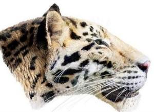 perierga.gr - Μια τίγρη ηλικίας 2 εκατομμυρίων... ετών!