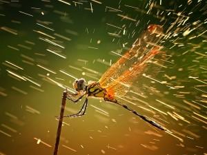 Οι καλύτερες φωτό του National Geographic για το Δεκέμβριο του 2011