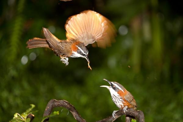 perierga.gr - Τα πτηνά όταν τρώνε είναι σαν τα... μωρά!