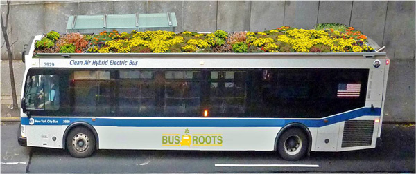 perierga.gr - Άνθισαν οι οροφές των... λεωφορείων!