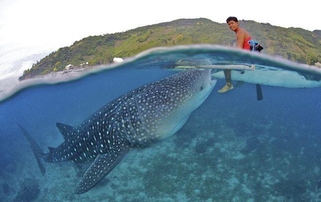 Perierga.gr - Ταΐζουν στο στόμα… φαλαινοκαρχαρίες