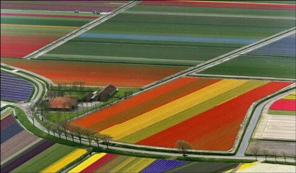 "perierga.gr - Τα λιβάδια... ""βγαίνουν"" σε όλα τα χρώματα!"