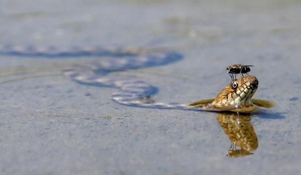 perierga.gr - Τα έντομα και τα ερπετά... πάνε μια βόλτα!