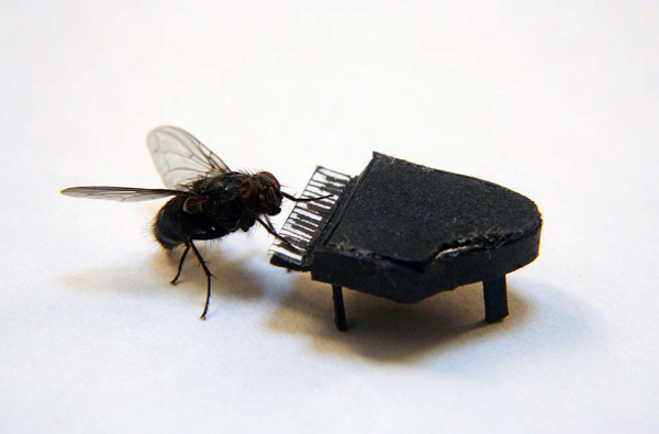 perierga.gr - Το περιπετειώδες 24ωρο μιας... μύγας!