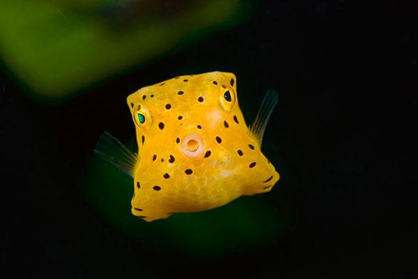Perierga.gr - Τα πιο περίεργα ψάρια που έχετε δει ποτέ