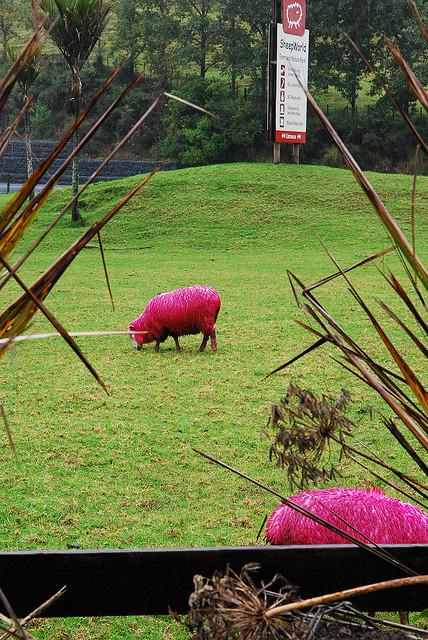 perierga.gr - Τι κάνουν τα ροζ... πρόβατα μέσα στο πάρκο;
