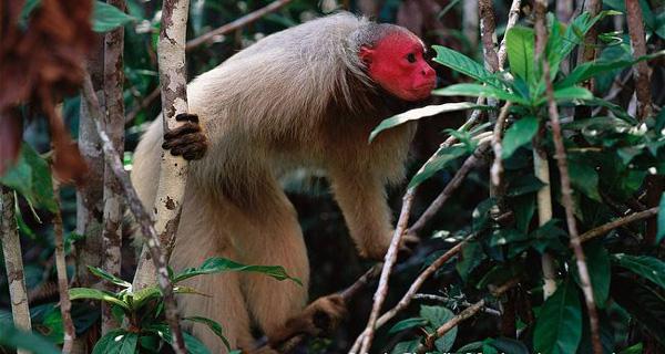 perierga.gr - Το πιο ντροπαλό ζώο στη γη!