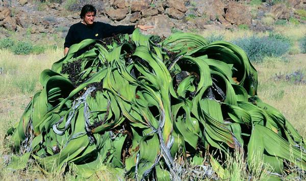 perierga.gr - Ένα σπάνιο φυτό που μοιάζει με... σωρό σκουπιδιών!