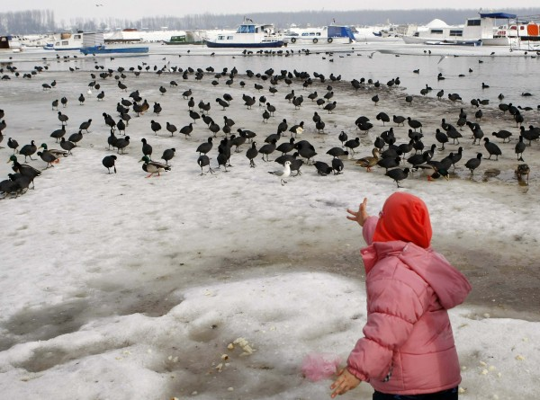 Ταΐζοντας κύκνους στον παγωμένο Δούναβη
