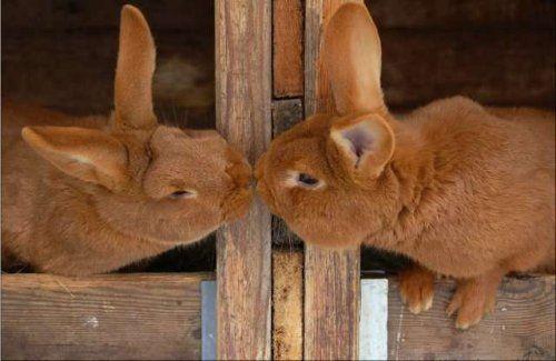 perierga.gr - Ζώα... τρελά ερωτευμένα!