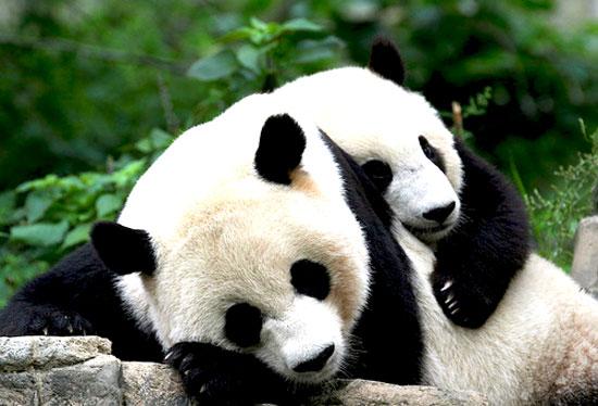 Ζώα... τρελά ερωτευμένα!