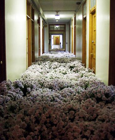 """perierga.gr - 28.000 φυτά """"πλημμύρισαν"""" ένα ψυχιατρείο!"""