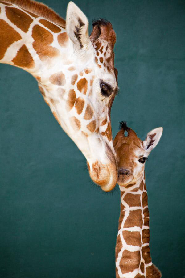 perierga.gr - Η αγάπη της μαμάς είναι η καλύτερη...